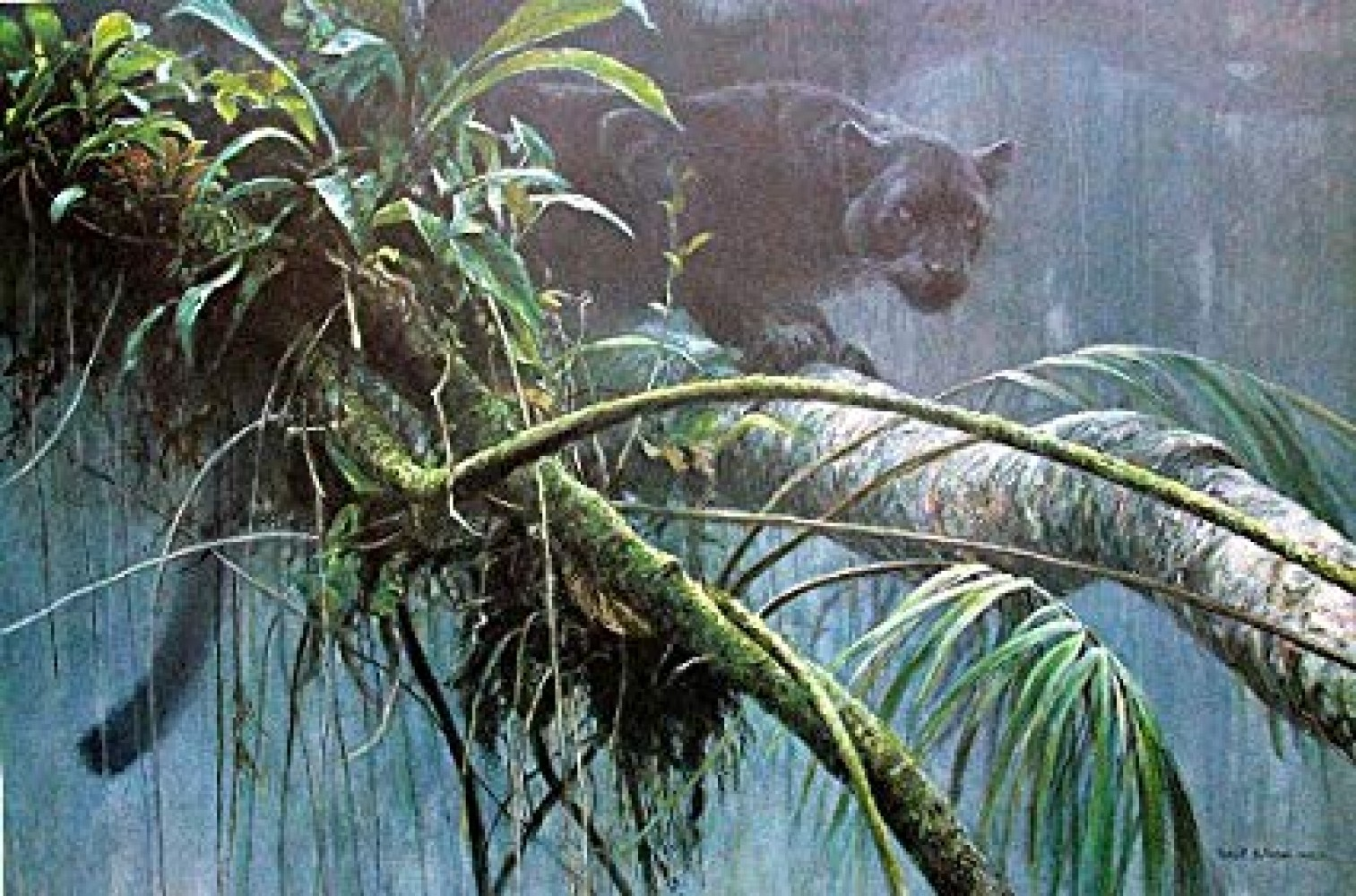 Shadow of the Rainforest 1993