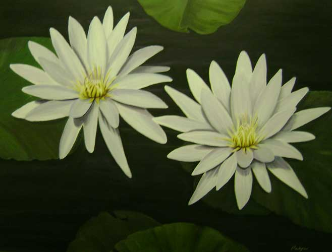 White Water Lilies 2011 30x40