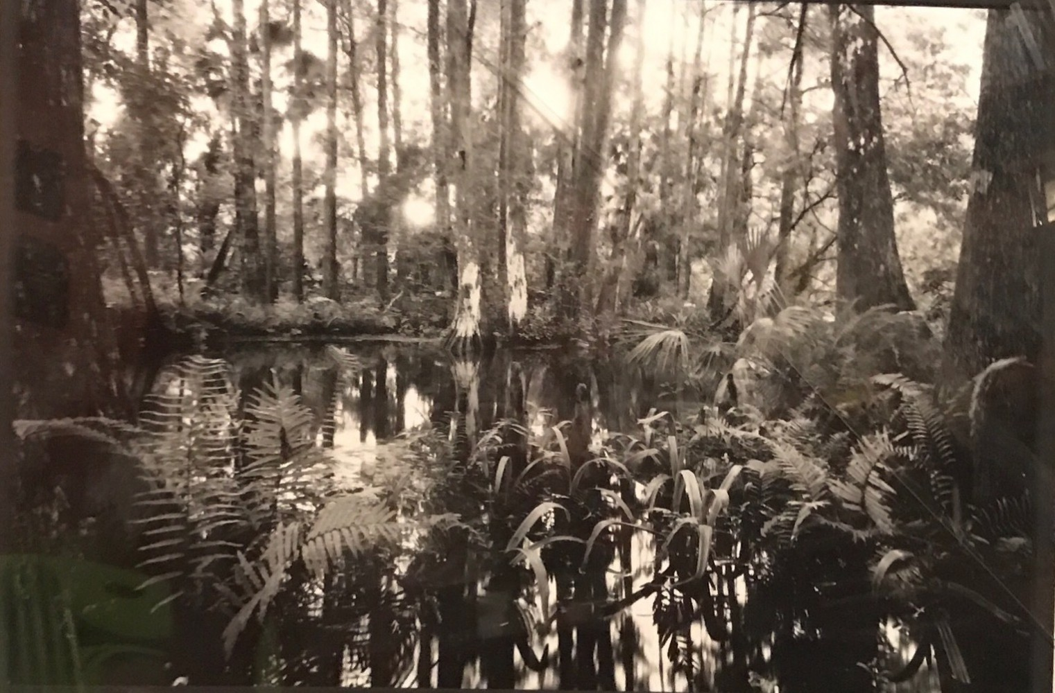 Loxahatchee #5 1991 Florida