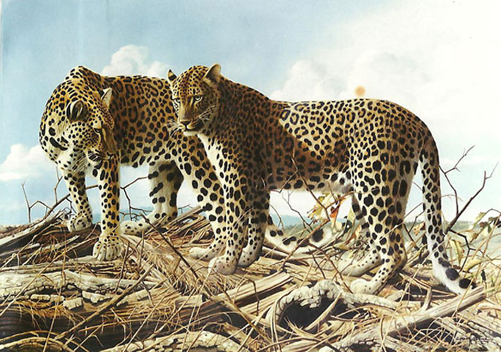Leopard Lovers At Chitake Springs 1995 35x47