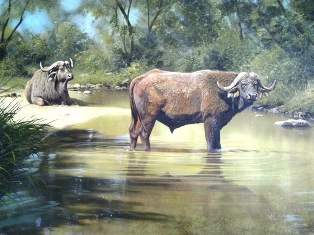 Untitled Water Buffalo 1995 29x50