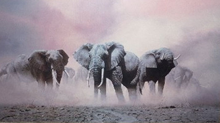 Ghosts of Etosha