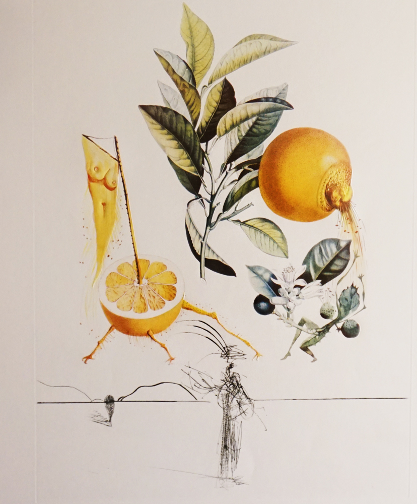 Flordali / Les Fruits Grapefruit 1969