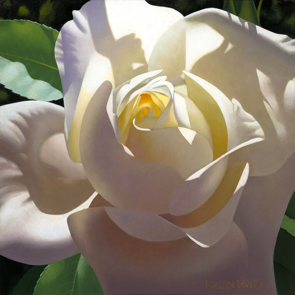 Pale Golden Rose 16x16