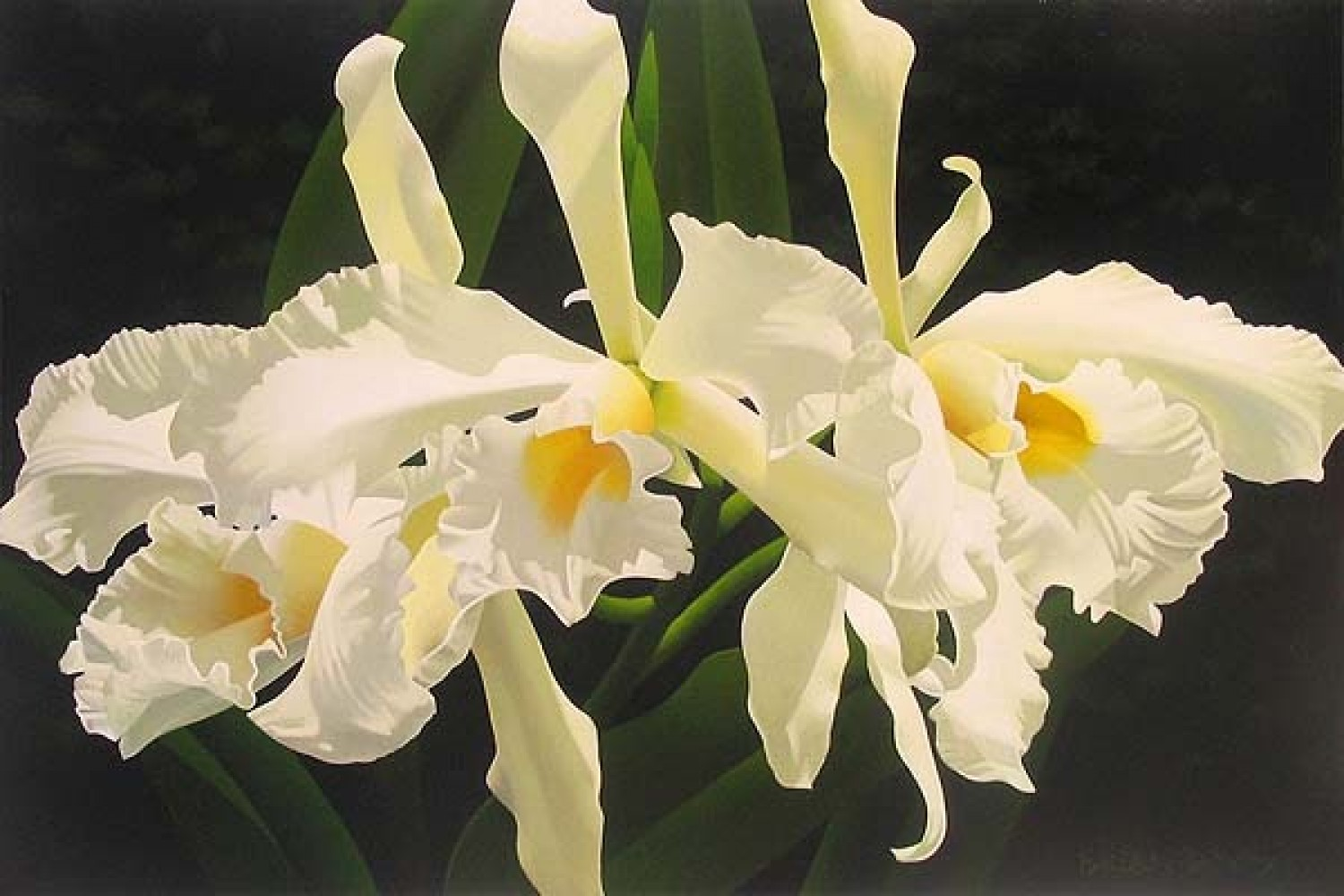 Pale Yellow Cattleya 24x36