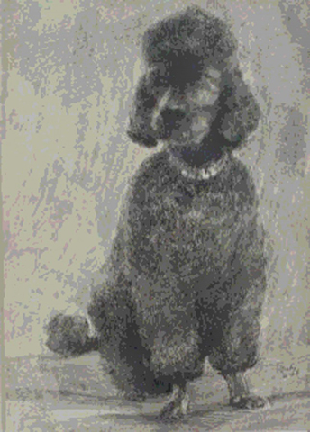Pepper The Poodle 1968 by Neal Doty