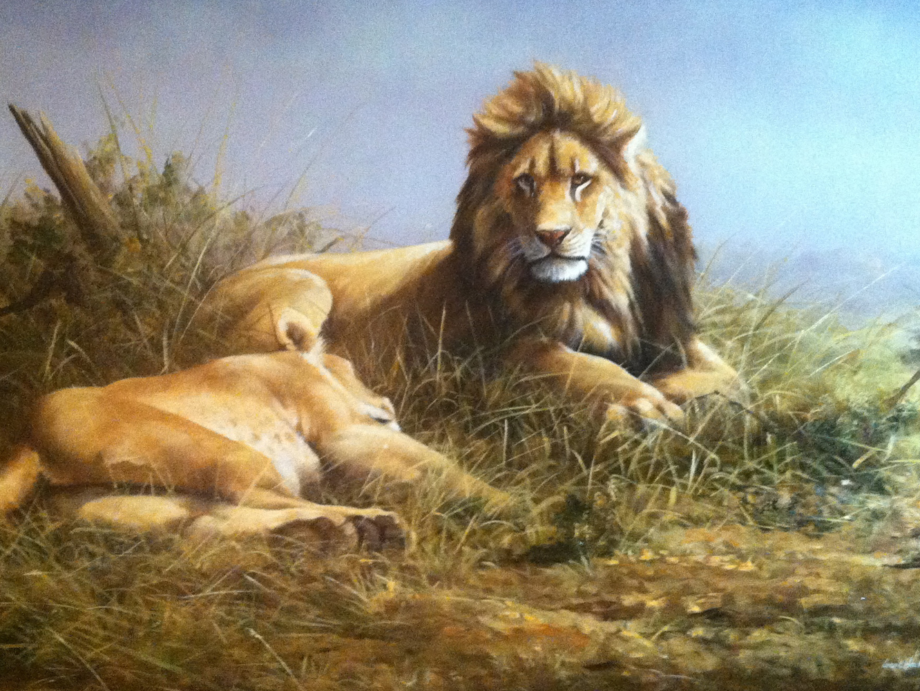 Lion And Lioness 1995 33x47