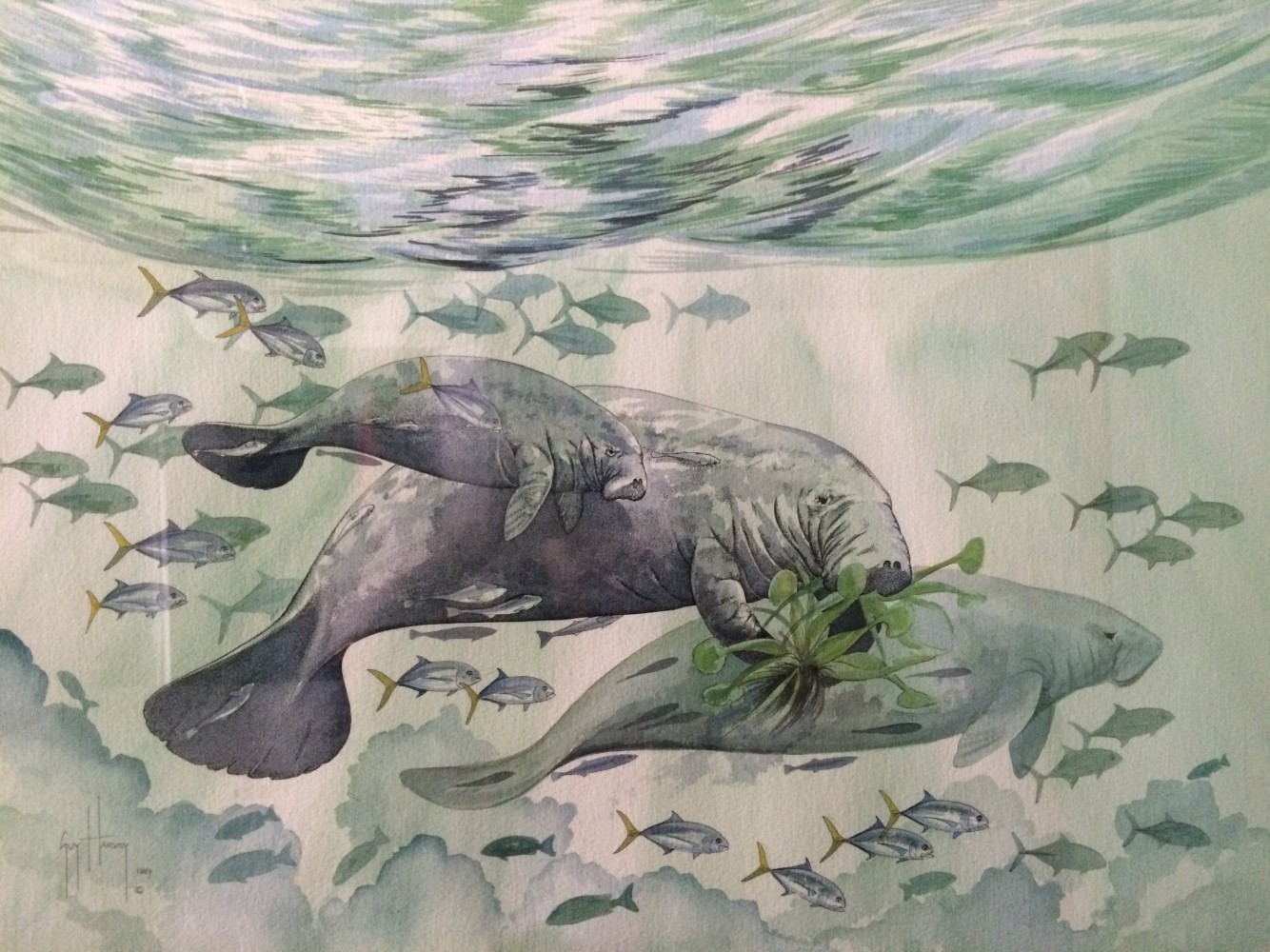 Manatees Watercolor 1987 18x24