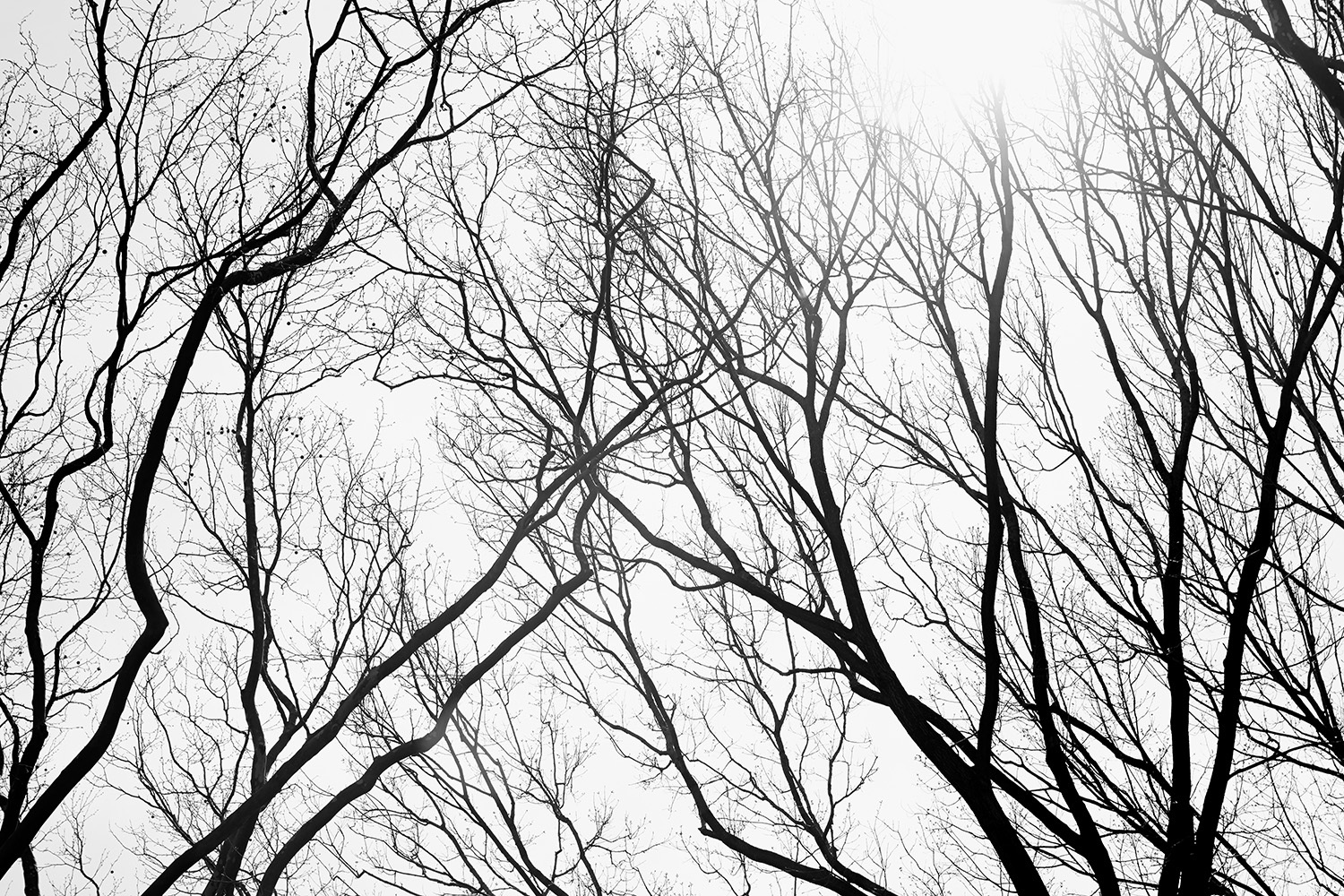 Branches Series 1, NYC 2014