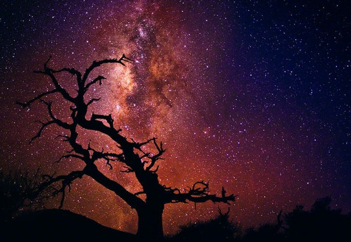Tree of the Universe,  Mauna Kea,   The Big Island. Hawaii