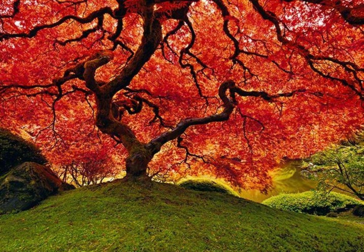 Tree of Life (Oregon)
