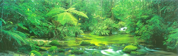 Mount Lewis Rainforest, Australia