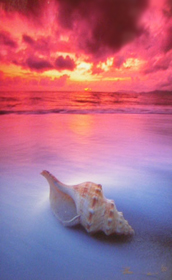 Shell Sunrise (small edition)