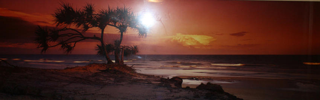 Pandanus Twilight (Frazier Island) (small edition)