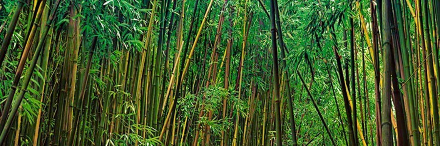 Prosperity by Peter Lik