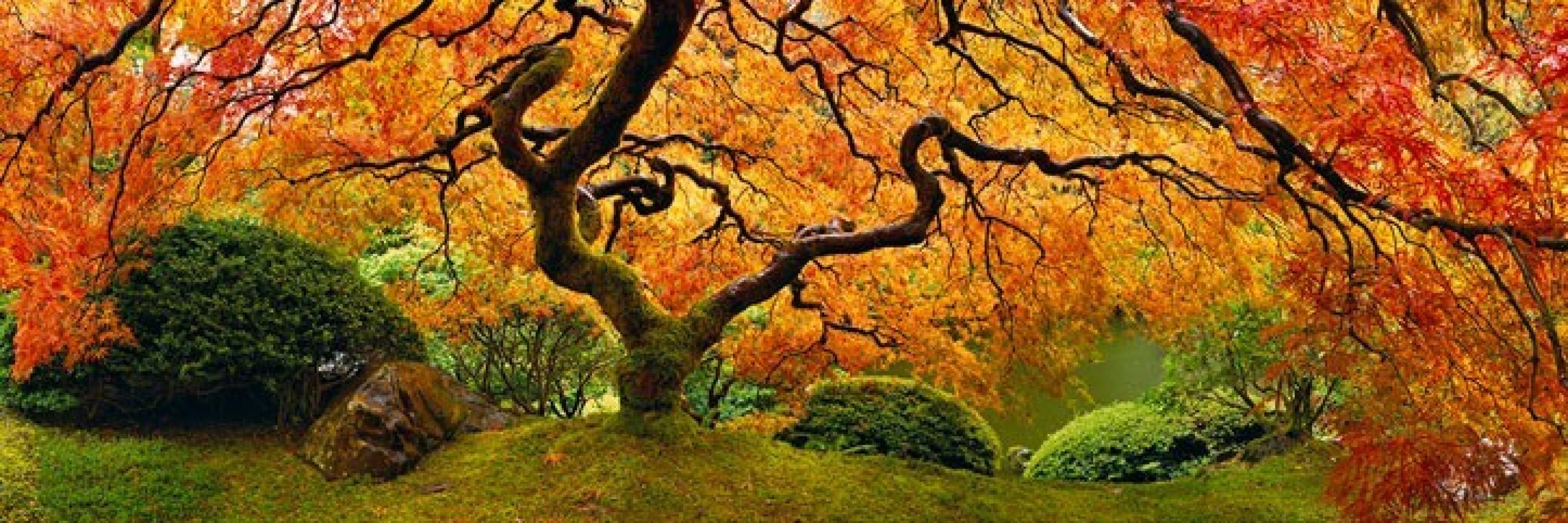 Tree of Zen