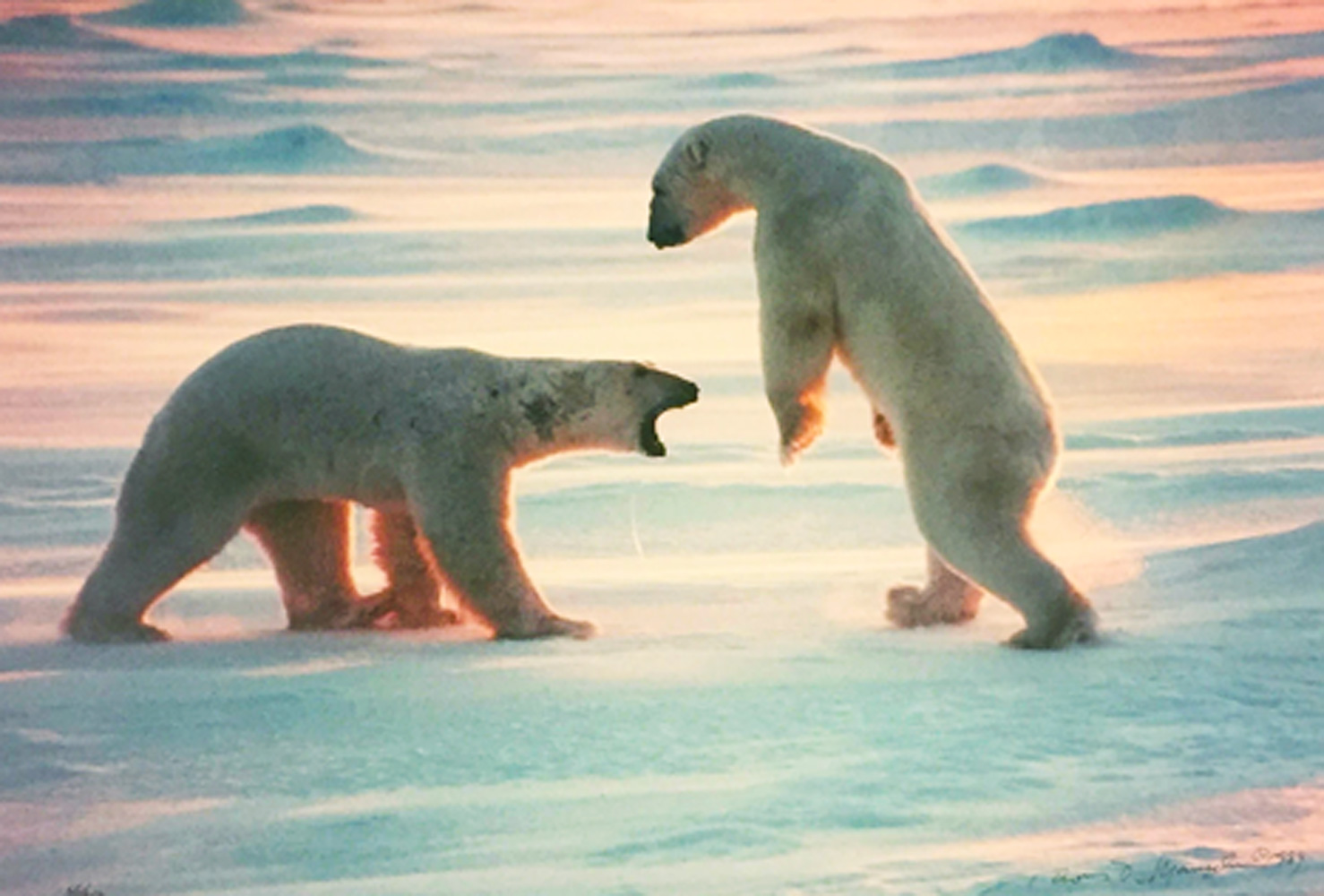 Arctic Encounter