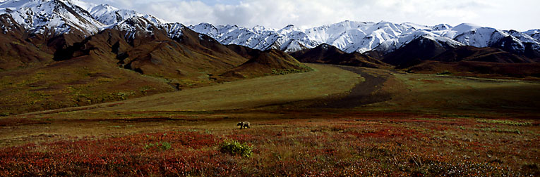 After the Ice Age - Grizzly Bear-Denali 2001
