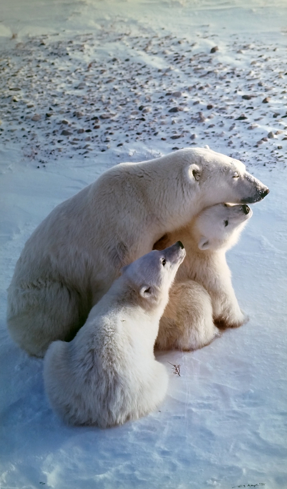 Mother's Love (Polar Bear)