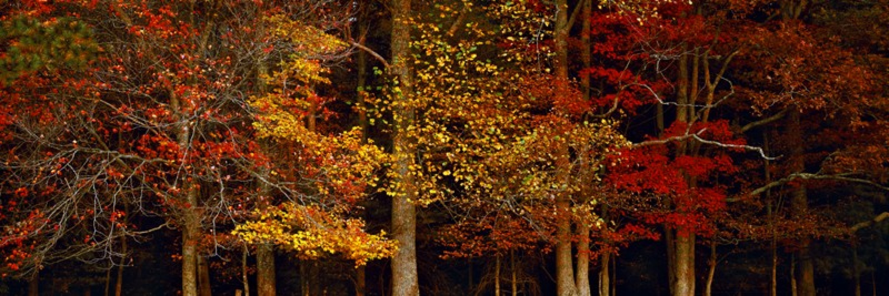Peter Lik Art For Sale