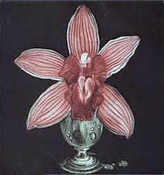 Orchid 1988