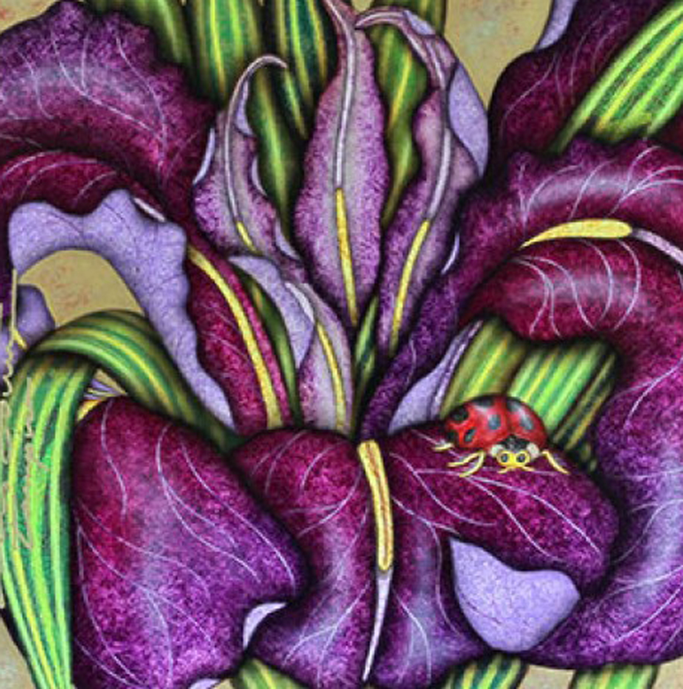 Fall  (Purple Iris) 2006 38x38