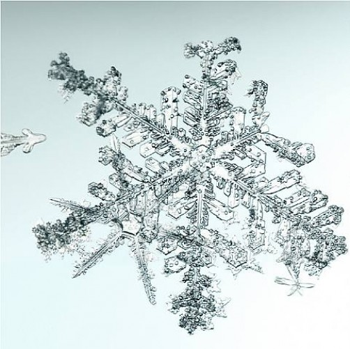 Untitled (Snowflake) 2006