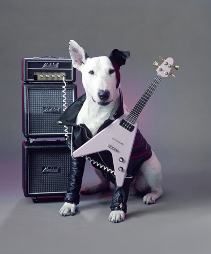 Rick Springfield's Jack Russell Terrier 1985