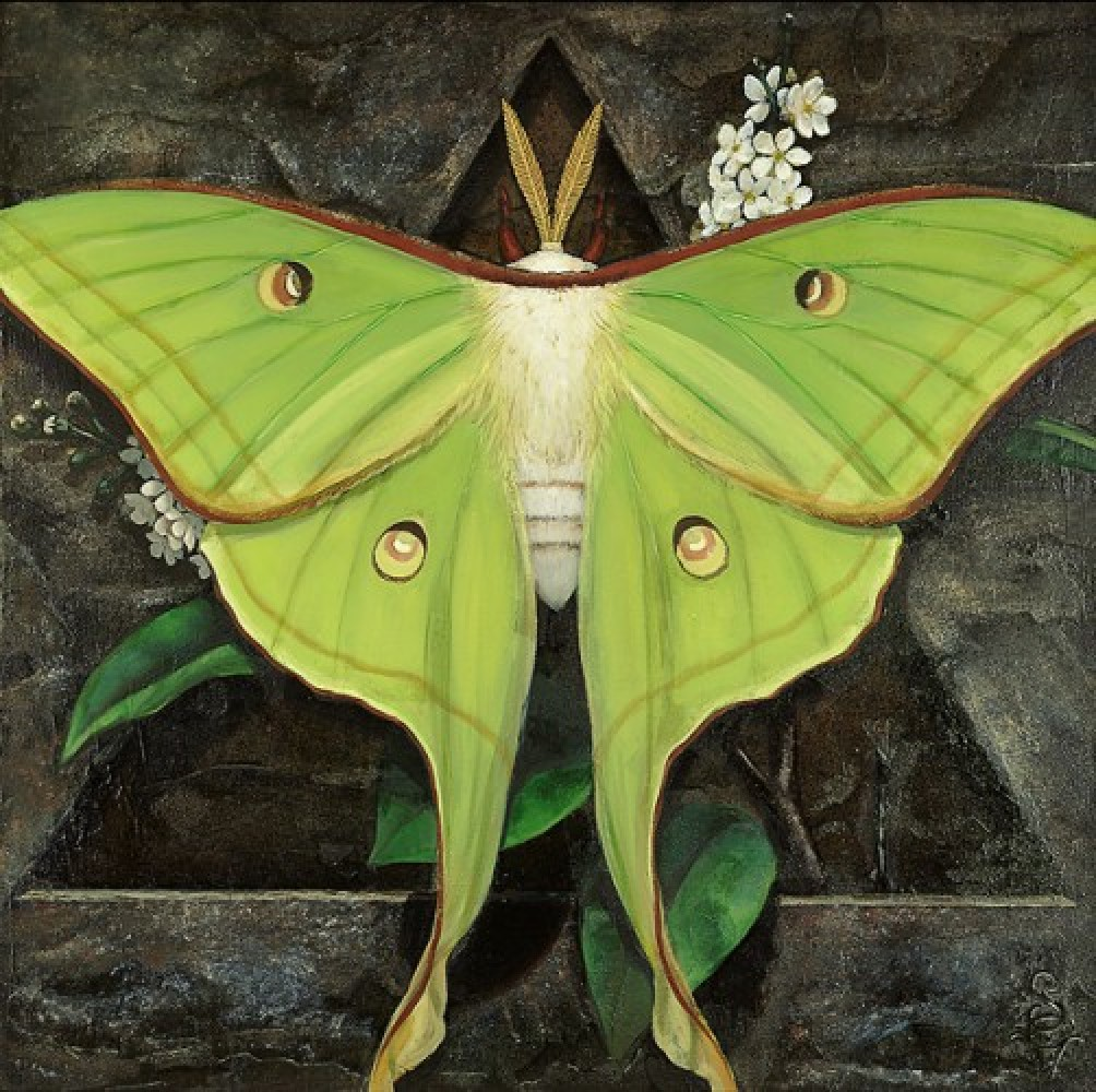 Moon: Lunar Moth