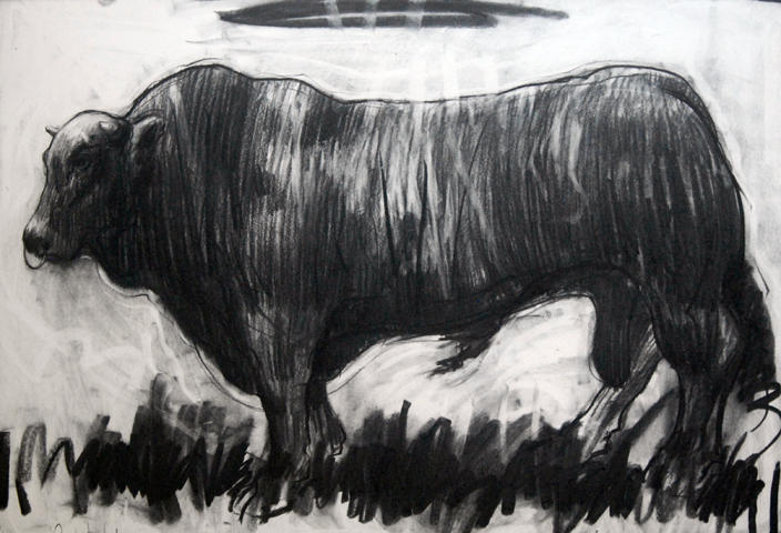Bull Charcoal on paper 2013 27x39