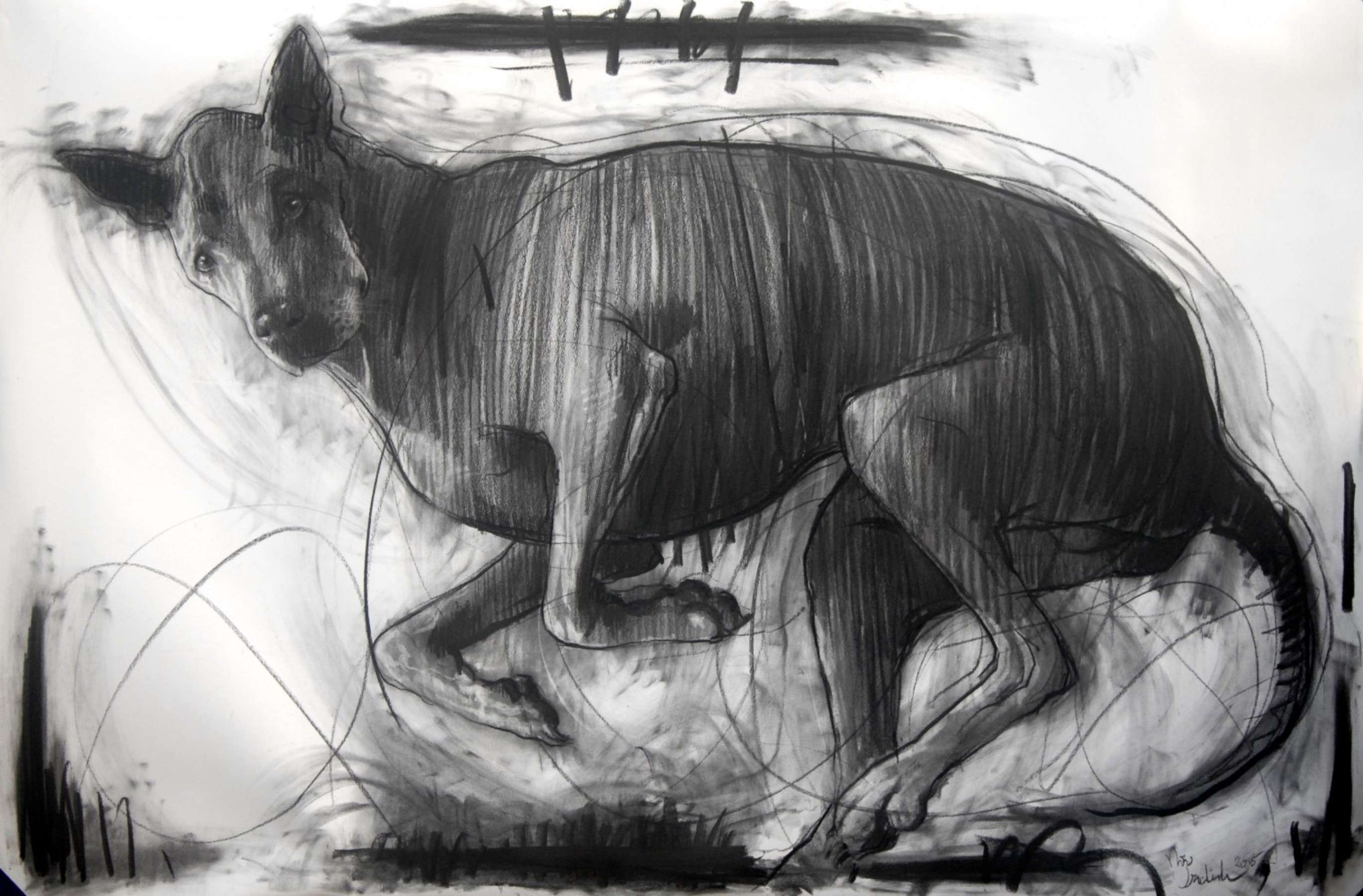 Sputnik, My Dog Drawing 2015 39x59