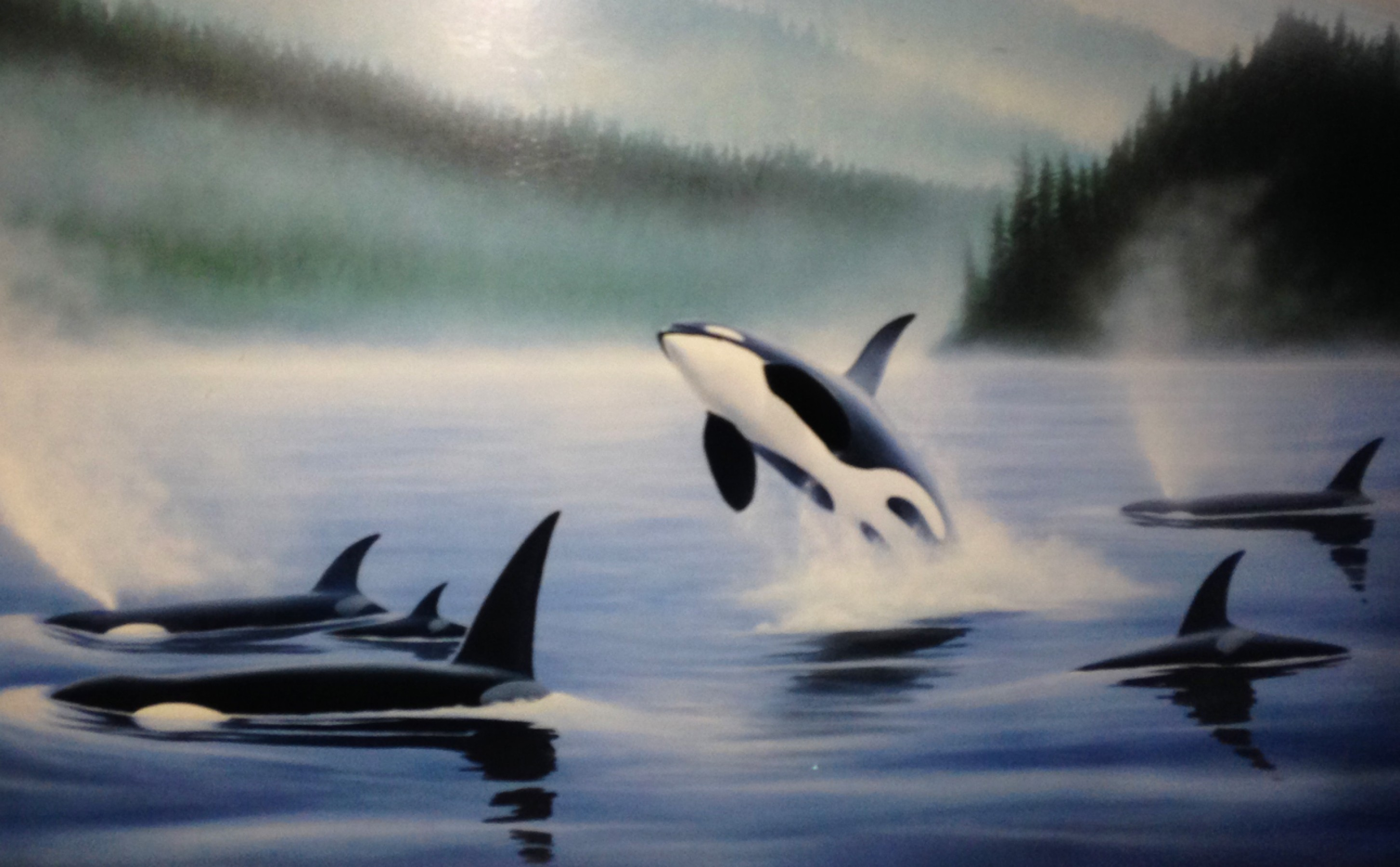 Northern Pacific Orcas, Set of 3 Prints 1985