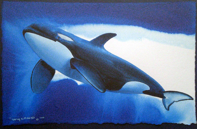 Orca Free Watercolor 1998 16x20