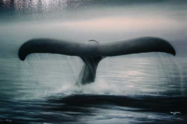 Tails of Great Whales 2003