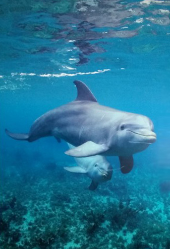 Dolphin Time 2006