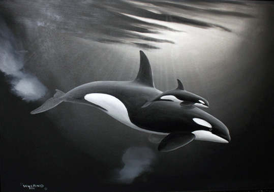Orca and Calf 1990 27x37