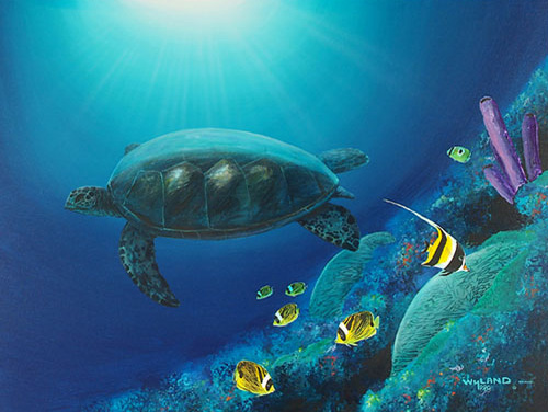 Turtle on Reef 1999 48x38