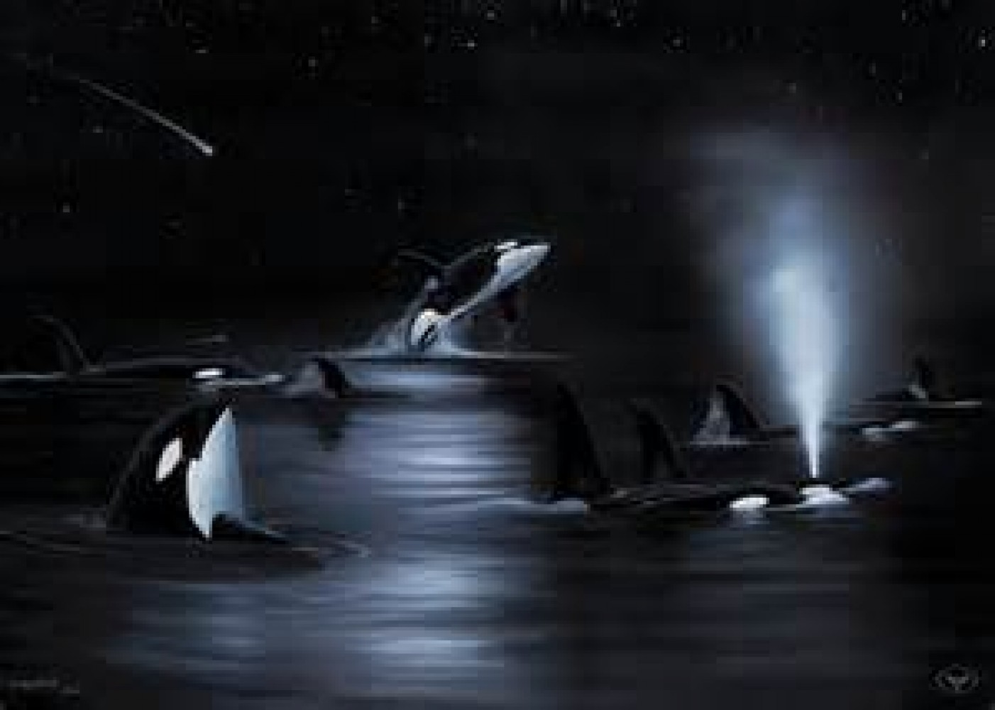 Orca's Starry Night 2004 53x42