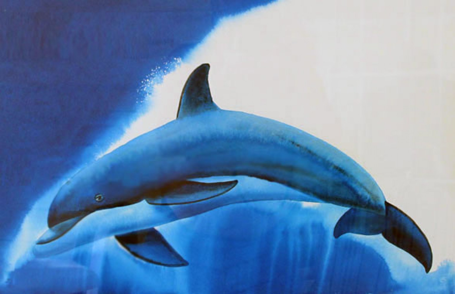 Dolphin Sea Watercolor  2011 38x31