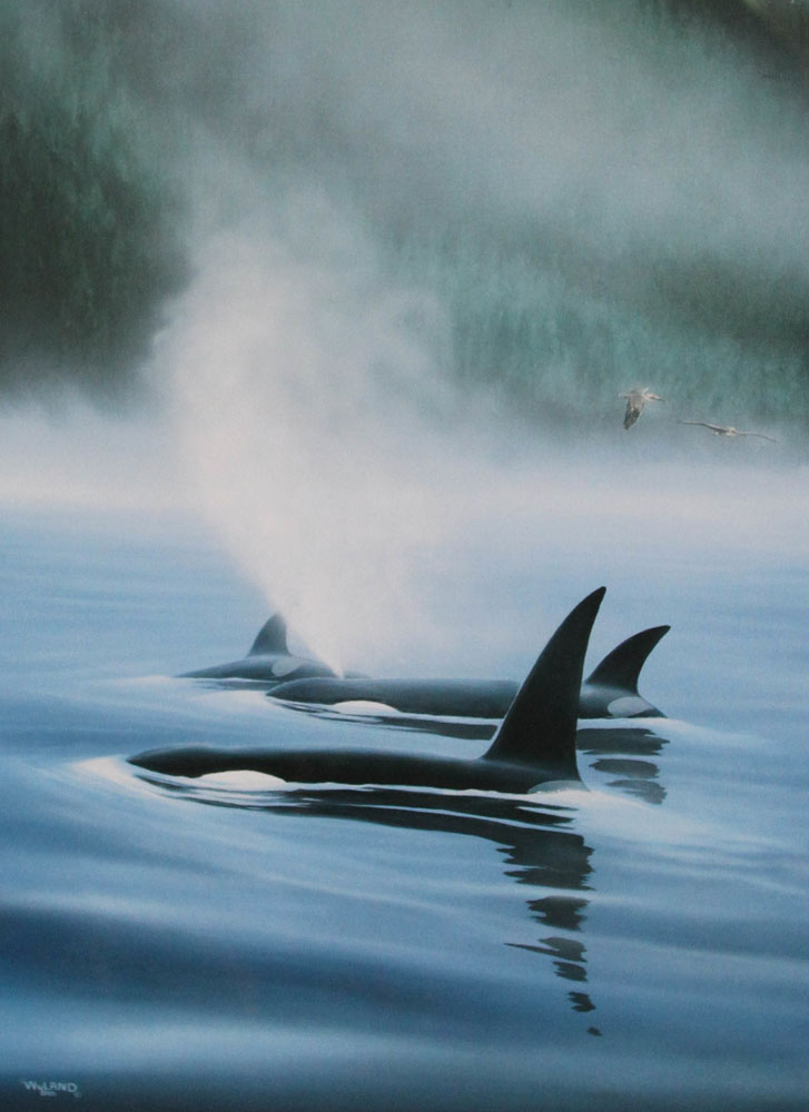 Northern Pacific Orcas, Suite of 3 1985