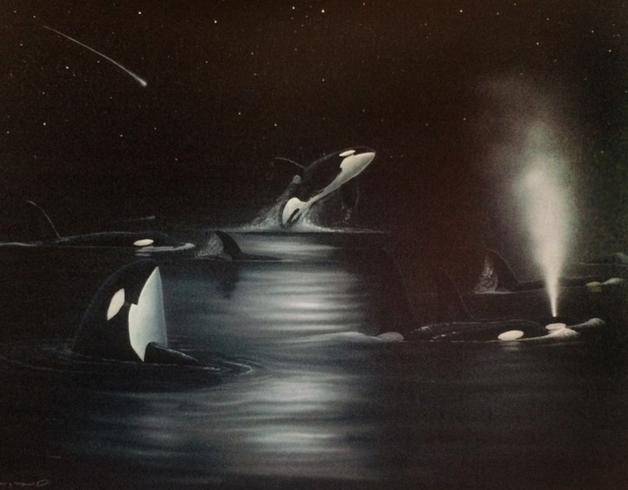Orca Starry Night 53x42