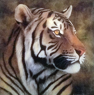 Tiger Portrait 2012 Limited Edition Print - Andrew Bone