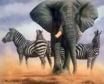 Ghost of Etosha 2012 Limited Edition Print - Andrew Bone