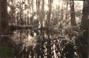 Loxahatchee #5 1991 Florida Panorama - Clyde Butcher