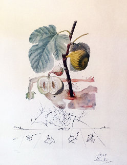 FlorDali, Les Fruits Homme Figuier, Fig  1969 Limited Edition Print - Salvador Dali