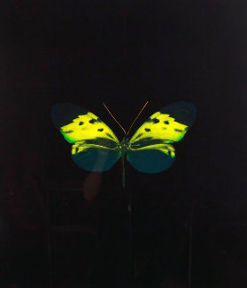 Soul on Jacob's Ladder Take Their Flight - Green 2007 Limited Edition Print - Damien Hirst