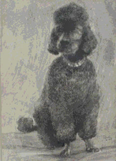 Pepper The Poodle 1968 Limited Edition Print - Neal Doty