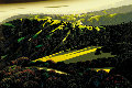 Santa Cruz Mountains 1999 Limited Edition Print - Eyvind Earle