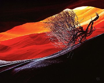 Burning Bush Panorama - Michael Fatali