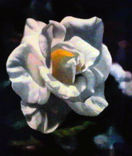 Rose I Limited Edition Print - Michael Gerry